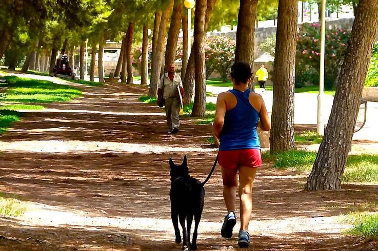 running mascota consejos interior