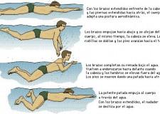 Diferentes estilos de natación