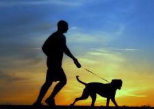 Correr con tu mascota, ¿sí o no?